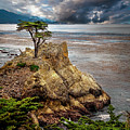 Lone Cypress In Monterey Bay by Endre Balogh