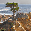 Lone Cypress - The Icon Of Pebble Beach California by Christine Till