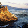 Lone Cypress Tree by Michael Howell - Printscapes