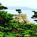 Lone Cypress  by Wendy Johnson