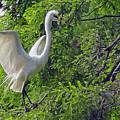 Lone Egret by Suzanne Gaff