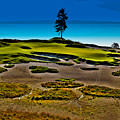 Lone Fir - Hole #15 At Chambers Bay by David Patterson