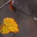 Lone Leaf by Naga Bhargav Garaga
