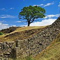 Lone Moorland Tree In Yorkshire Dales by Martyn Arnold