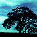 Lone Oak by Jim And Emily Bush