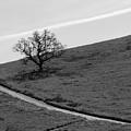 Lone Oak by Erin Donalson