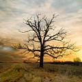 Lone Oak On The Marsh by Jayne Gulbrand
