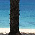 Lone Palm by Kathryn Carlin