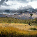 Lone Pine High Desert Nevada by Frank Wilson