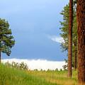 Lone Pine by Jill Reger