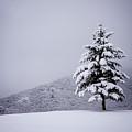 Lone Pine by Quinn Calder