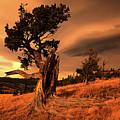 Lone Pine Whaleback Ridge by Bob Christopher