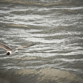 Lone Sea Gull by Kim Henderson