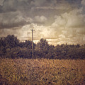 Lone Telephone Pole In Autumn Field by Melissa D Johnston
