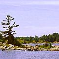 Lone Tree 3 Db  by Lyle Crump