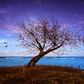 Lone Tree by Alina Davis