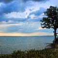 Lone Tree And Beach Flowers by Carolyn Fletcher