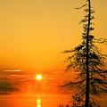 Lone Tree At Dawn by Tony Beaver