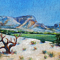 Lone Tree At The Ghost Ranch by M Schaefer