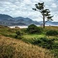Lone Tree by Claudia Kuhn