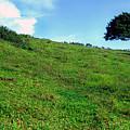 Lone Tree Hill  by Thomas R Fletcher