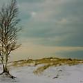 Lone Tree-horizontal by Marti Buckely