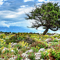 Lone Tree In Rab Landscape by Global Light Photography - Nicole Leffer