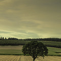 Lone Tree In The Field by Don Schwartz
