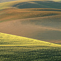 Lone Tree In The Palouse  by Sandra Bronstein
