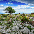 Lone Tree In Windswept Rab Landscape by Global Light Photography - Nicole Leffer