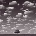 Lone Tree Morning In B And W by Steve Gadomski