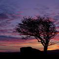 Lone Tree Near Holwell Tor On Dartmoor by Pete Hemington