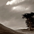 Lone Tree On A New Zealand Hillside by Mark Duffy