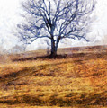 Lone Tree On Hill In Winter by Betty Denise