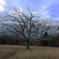 Lone Tree by Paul A Williams