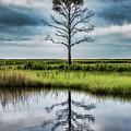 Lone Tree Reflected by Erika Fawcett
