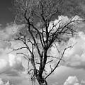 Lone Tree by Rich Stedman