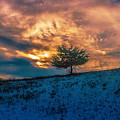 Lone Tree by Robert Rotkowitz