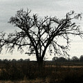 Lone Tree by Rodger Mansfield