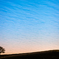 Lone Tree Sunrise by Kelly Bryant