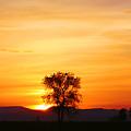 Lone Tree Sunset by Nick Gustafson
