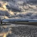 Lone Tree Under Moody Skies by Harry B Brown
