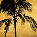 Lonely Bird by Iris Greenwell