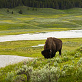 Lonely Bison Valley by Chad Davis