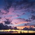 Cacti Sunset by Stefan Prelog