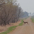 Lonely Deer Crossing by Wayne Williams