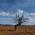 Lonely Dry Tree In A Field by Sergey Giviryak