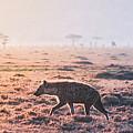 Lonely Hunter by Eevamaija Virtanen