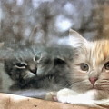 Lonely Kittens Behind The Glass by Yury Bashkin