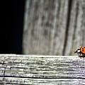 Lonely Ladybug by Ms Judi